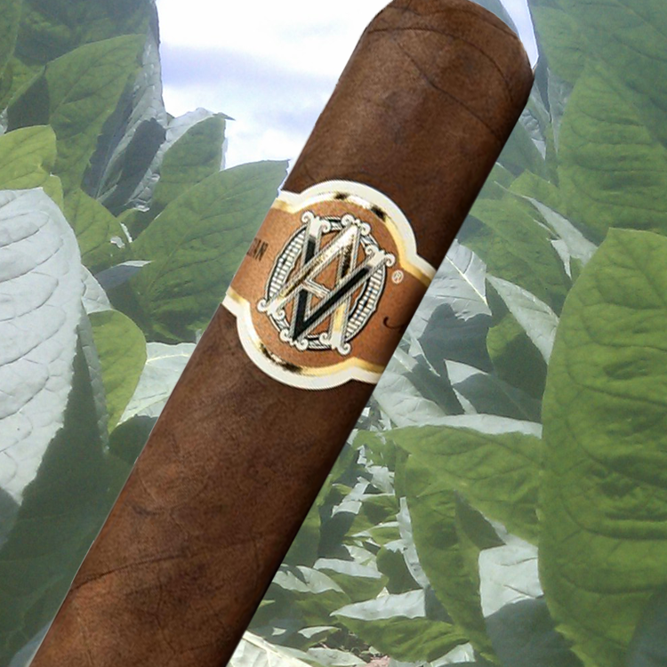 AVO Limited Edition Cigars